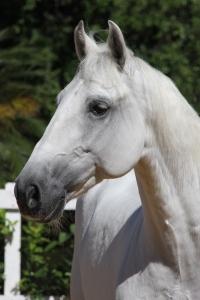 Haras das Mangueiras - Cavalos a Vendas - Bilbo Interagro