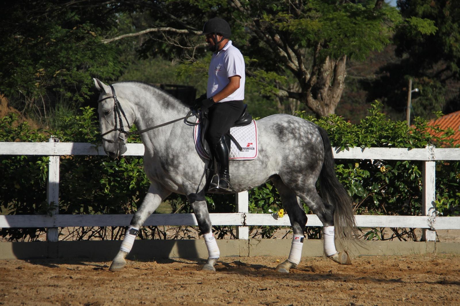 Haras das Mangueiras - Cavalos a Vendas - Destino das Mangueiras