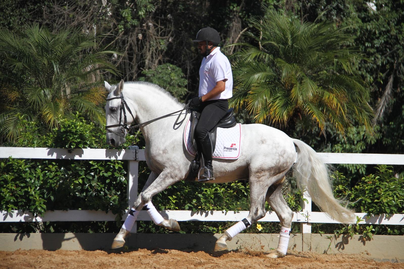 Haras das Mangueiras - Cavalos a Vendas - First das Mangueiras